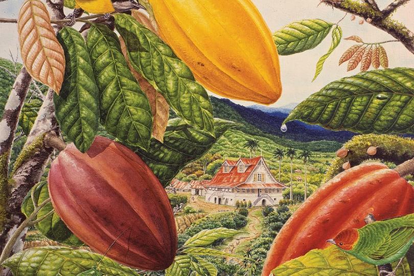 plantaže kakaovca
